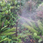 Mosquito Misting Systems in the garden area